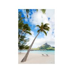 Beautiful Beach with Coconut Palms on Bora Bora Island in French... ($40) ❤ liked on Polyvore featuring home, home decor, wall art, beach scene wall art, photographic wall art, beach wall art, island home decor and beach home decor