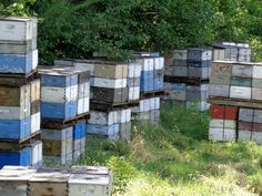 https://www.etsy.com/listing/156875066/photograph-bee-hive-boxes-active-country