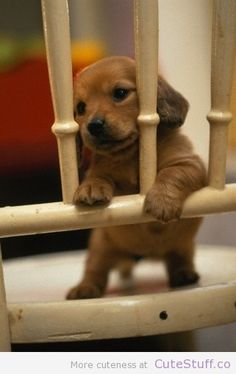 Get me out of jail