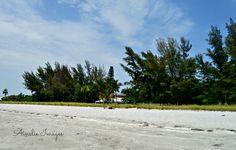 Nature photography  Captiva FL Ainslie Images