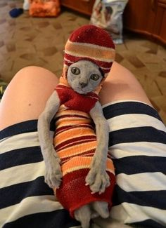 This cat isn't sure how it all came to this moment, stuck in a sock, but she's definitely not okay with it. | 25 Cats That Could Be Having A Better Day