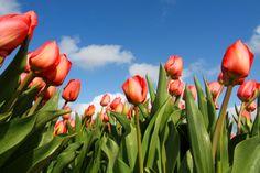 #Groupon #Amsterdam #travel Groupon Viaggi - Amsterdam, fiori e design