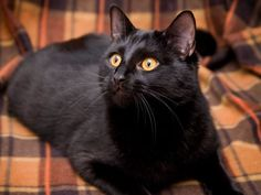 Polnočný duch Woman, Halloween, Cats, Animals, Gatos, Animales, Animaux, Women, Animal