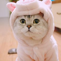 My eyes accidentally hit your cuteness…Moaw 😍🤩✨ – disguised-interpret Cute Baby Cats, Baby Kittens, Cute Cats And Kittens, Cool Cats, Kittens Cutest, Funny Animal Pictures, Cute Funny Animals, Cute Baby Animals, Gatos Cool