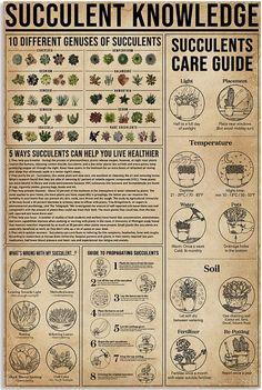 Succulents Garden, Garden Plants, Indoor Plants, House Plants, Garden Yard Ideas, Diy Garden Projects, Survival Skills, Survival Tips, Container Gardening
