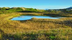 Susie Sun 2011 posted a photo:  Dunes rainwater pond. The size of the dunes area is around 4.63 km², the characteristic vegetation is very interesting, all growing on sand, so as the lovely rainwater ponds and some huge white sand dunes, depending the sunlight it becomes golden, or pink-golden in the sunset or sunrise.  This season brings the most beautiful colors and lighting in this island, so as the perfect temperature, between 18ºC and 23ºC.  Lagoa da Conceição Dunes Municipal Park…