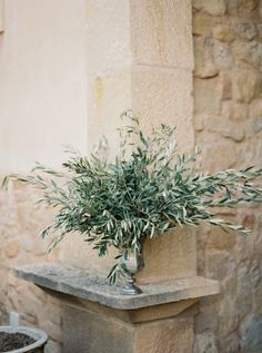 This Organic Al Fresco Mediterranean Wedding Inspiration from Mireia Cordomí and A todo Confetti features an open lace back dress. Olive Branch Wedding, Olive Wedding, Tree Wedding, Wedding Table, Floral Wedding, Rustic Wedding, Wedding Flowers, Branches Wedding, Wedding Church