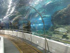 Vue du tunnel sous-main de l'Aquarium de Barcelone