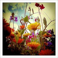 Field of flowers from the underside