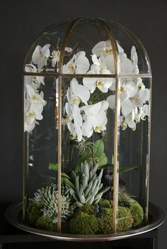 Wonderful DIY glass terrarium ideas (instructions for making terrariums and . - Wonderful DIY glass terrarium ideas (instructions for the production of terrariums and care) – -