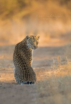 Golden Shongile by Keith Connelly on 500px