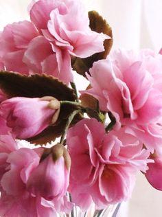 Japanese Cherry Blossom in sugar by Naomi Yamamoto Flower Crafts, Craft Flowers, Fondant, Chocolate Showpiece, Sugar Paste Flowers, Chocolate Flowers, Cake Makers, Modeling Chocolate, Sugar Craft
