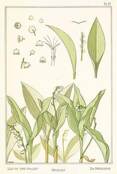 """Lily Of The Valley"" - Botanical illustration by E. Hervegh from ""La Plante et Ses Applications Ornamentales"", by Eugène Grasset, published by Eugène Lévy (1896)"