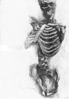 Human Skeleton sketch in pencil