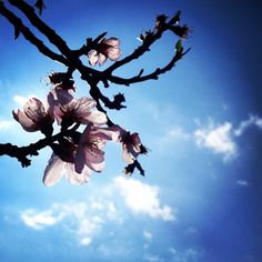 Eliza's K photos | #spring #nature_greece #igers_greece #igers...