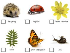 Why not have a spring nature trail? Use this amazing free pack from Nature Detectives - including tick list, map template, photos, tips and ideas