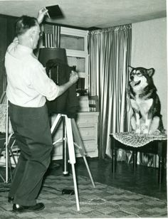 We love going behind the scenes in dog portraiture. This shot of a shot of an Alaskan Malamute appeared as the frontispiece in a 1955 AKC gazette -- captioned Artists and Models. Malamute Dog, Alaskan Malamute, Daisy Dog, Akc Breeds, Artists And Models, Old Dogs, New Puppy, Old Pictures, Husky