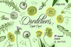 Dandelions Digital Clipart with leaves and flowers, summer botanical hand drawn sketches, sring floral Book Journal, Graphic Illustration, Design Illustrations, Scrapbook Pages, New Art, Design Bundles, Wall Art Prints, How To Draw Hands, Sketches