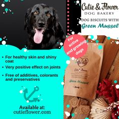 Green Mussels, Flower Dog, Dog Bakery, Dog Biscuits, Dog Coats, Healthy Skin, Handmade Gifts, Dogs, Etsy