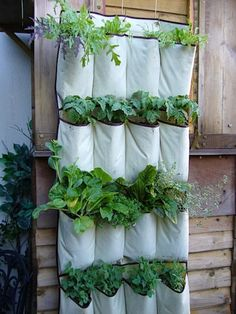 A shoe hanger turned herb garden.