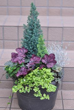 Container Plants For Winter Annual Plants Container plants for winter _ k Full Sun Container Plants, Winter Container Gardening, Container Gardening Vegetables, Container Flowers, Winter Planter, Fall Planters, Potted Plants Patio, Planting Plants, Potted Flowers