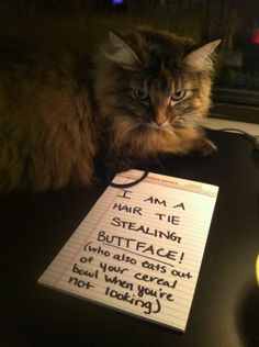 12 of The Most Amusing Cat Shaming Signs - ViralDire