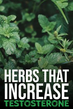 Do you know you can have herbs, instead of having food that increases testosterone? Check this out - Herbs that increase testosterone. Increase Testosterone Naturally, Natural Testosterone, Boost Testosterone, Weight Loss For Men, Lose Weight, Testosterone Boosting Foods, Build Muscle Fast, Healthy Eating Habits, Natural Herbs