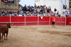 Santacara: Vacas Ustarroz - Día de las Bardenas (10) Soccer, Sports, Cows, Siblings, One Day, Hs Sports, Football, European Football, Sport