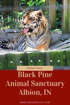 Black Pine Animal Sanctuary in Indiana - A look at what you'll find there, how it's different from a zoo, and why you'd want to visit. Wild Animal Sanctuary Colorado, Fort Wayne Zoo, Types Of Monkeys, Indiana Dunes, Surviving In The Wild, Road Trip Destinations, Exotic Pets, Exotic Animals, Adventure Tours