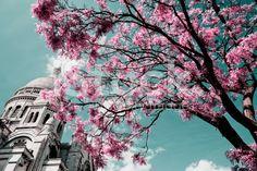 PARIS, França-Basílica do Sagrado Coração de Jesus. - fotografia de stock royalty-free
