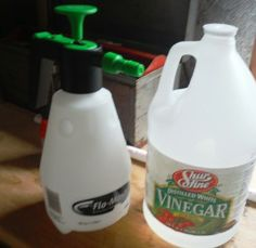 How to Make a Vinegar Weed Killer About G.J. Jones' Garden System Meet the Joneses Products We Use Subscribe For Free How to Make a Vinegar W...