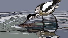 Avocet Feeding - linocut by Jenni Cator Lancaster University, Honours Degree, Bird Prints, Art Fair, Bird Art, Printmaking, Jenni, Contemporary Art, How To Draw Hands