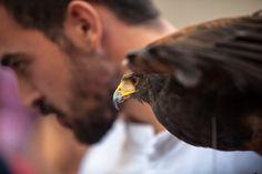 https://flic.kr/p/yGqzhE | Mirada de águila | Mimetismo
