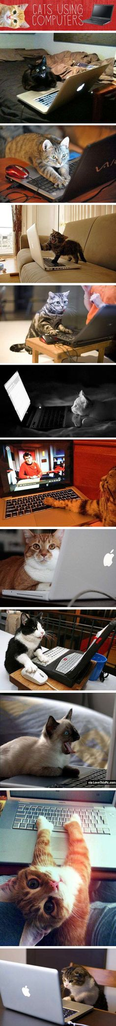 Cats Using Computers cute animals cat cats adorable animal kittens pets kitten funny pictures funny animals funny cats