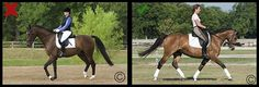 Equine Photography Tips from NickerTown.