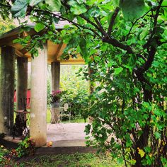 The beautifull garden of house Elegans in Lohja, Finland. Apple Festival, Helsinki, Small Towns, Outdoor Activities, Finland, Exotic, Outdoor Structures, Country, Garden