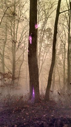 A Forest Service worker photographed a fire burning inside a tree while he's fighting Western N.C. wildfires. He said there is no filter on the photo rather the fire is so hot this is its actual color.   https://i.redd.it/oxqos8hd8twx.jpg via /r/woahdude https://www.reddit.com/r/woahdude/comments/5c8nrn/a_forest_service_worker_photographed_a_fire/?utm_source=ifttt