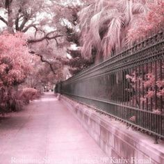 A path of pink!