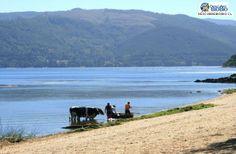 lago lanalhue - Buscar con Google