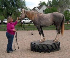 Extreme Trail Horse Obstacles | Wild Horses: Mica Goes to a Trail Obstacle Clinic with Carol