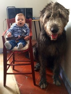 Irish Wolfhound Hector Animals And Pets, Funny Animals, Cute Animals, Beautiful Dogs, Animals Beautiful, Pet Dogs, Dog Cat, Doggies, Cute Puppies