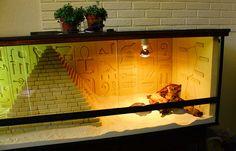 Handmade vivarium for a bearded dragon. Bearded Dragon Terrarium, Bearded Dragon Cage, Bearded Dragon Habitat, Bartagamen Terrarium, Mon Zoo, Bearded Dragon Enclosure, Pet Dragon, Reptile Enclosure, Handmade