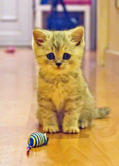 You can play with me?