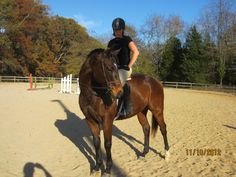 """Smax""  16'2"" OTTB from the Thoroughbred Retirement Foundation... and hopefully my next horse"