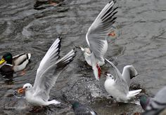 Bird, Photography, Animals, Photograph, Animales, Animaux, Birds, Fotografie, Photoshoot