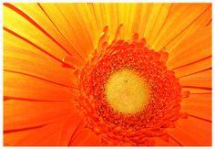 Orange Flower by Ruben Flanagan