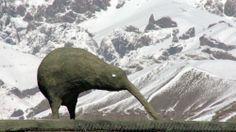 He Toki Huna NZ in Afghanistan