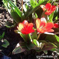 Heute im Garten gesehen #flowers #spring #gardening #Garden