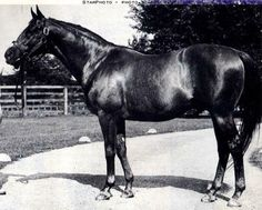 War Relic was one of Man o' War's lesser stakes winners on the track, but ironically is the conduit of his sire line to the modern day. Tiznow's sire line is inbred to him. He is in the direct line of sires, being the sire of Intent, and also appears in the pedigree as the broodmare sire of My Dear Girl. There is also a line back to Fair Play, Man o' War's sire, through his grandson Discovery, broodmare sire to Intentionally.