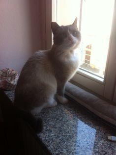 #gattacherie alla finestra